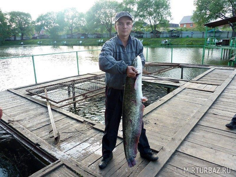 кафе рыбалка в островцах