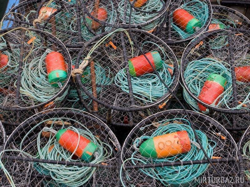 как ловить крабов черного моря