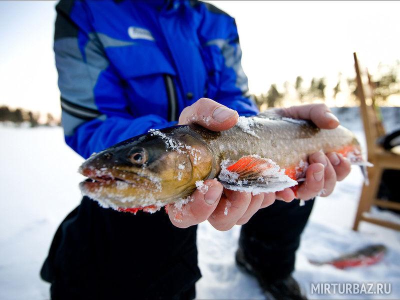 воронеж рыбный клев
